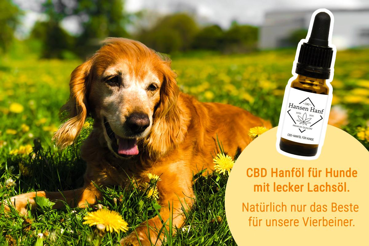 CBD ÖL für Hunde | 6%