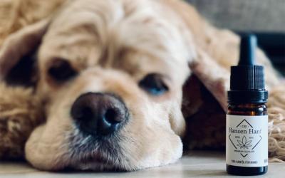 Warum CBD gut für dein Haustier ist